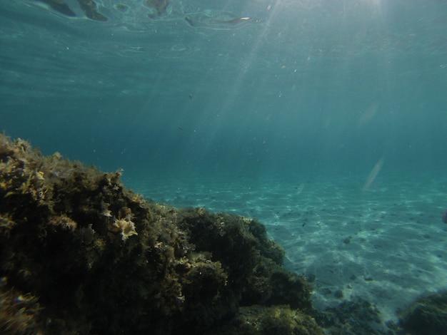 Vista subacquea del mare trasparente del sud sardegna
