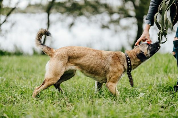 Ragazza sconosciuta che gioca con il cane divertente in natura