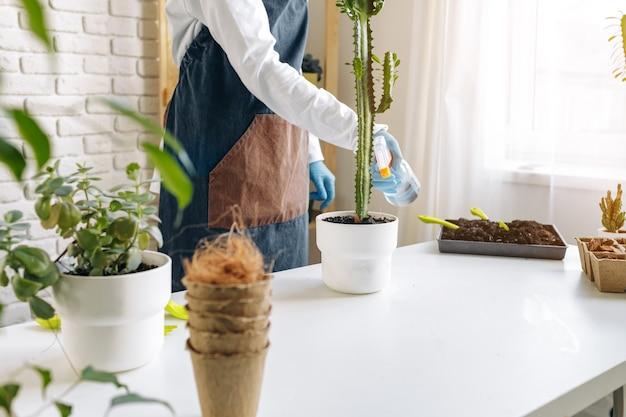 Pianta domestica di trapianto femminile irriconoscibile vicino, hobby di giardinaggio