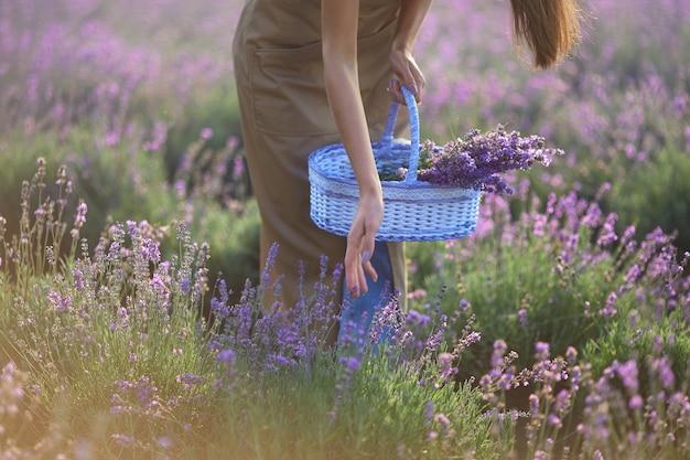 Ragazza irriconoscibile che raccoglie il raccolto di lavanda nel cestino Foto Premium