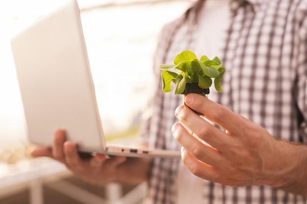 Uomo irriconoscibile utilizzando laptop e dimostrando pianta mentre controlla il microclima in serra in fattoria