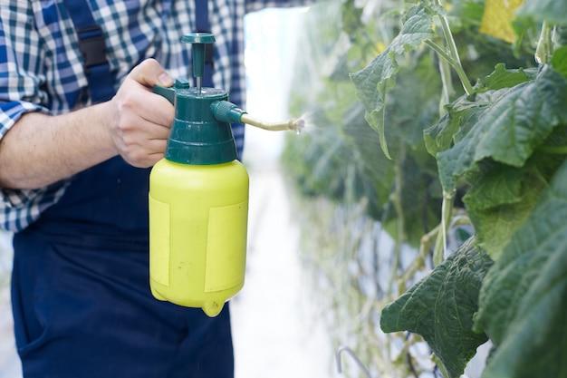 Irriconoscibile plantation worker spray treating plants