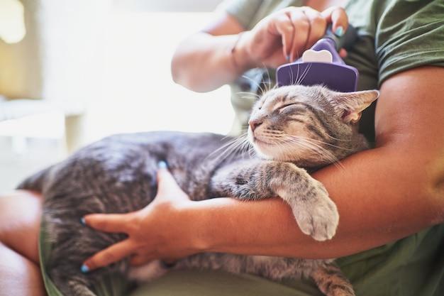 Donna spagnola irriconoscibile che spazzola i capelli del suo gatto