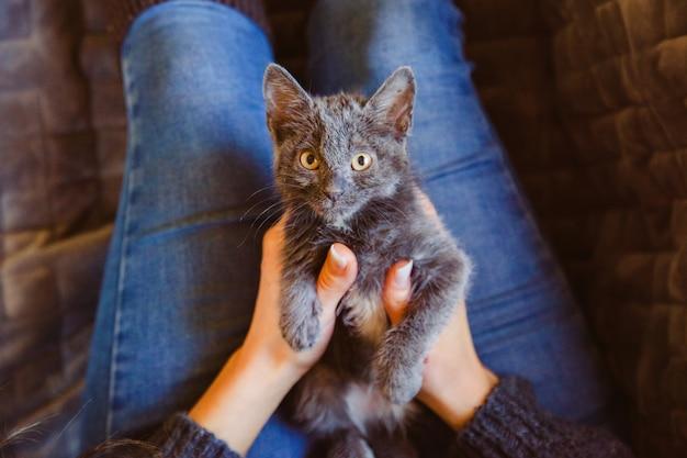 Donna irriconoscibile che accarezza e gioca con un gatto di strada. stile di vita per gli amanti degli animali.