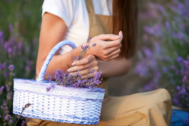 Donna irriconoscibile che raccoglie il campo di lavanda del raccolto