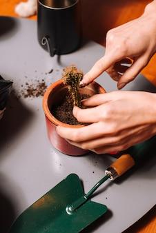 Donna irriconoscibile che pianta cactus in terreno fertile