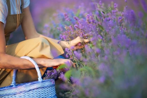 Irriconoscibile donna con cesto di campo di lavanda