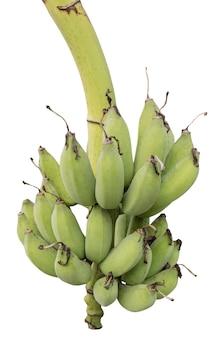 Banane non mature nella fine della giungla in su