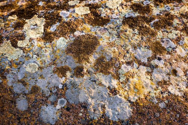 Un modello insolito di muffa multicolore sul muro di pietra grigia con texture di muschio