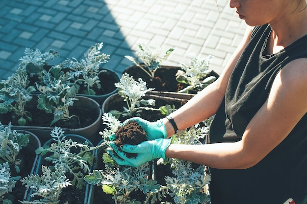 Foto vista dall'alto di una donna caucasica impegnata che sostituisce un fiore da un vaso all'altro