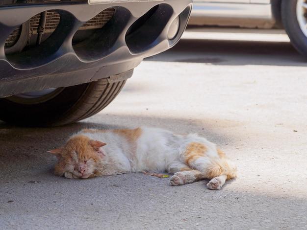 Il gatto del cairo urbano dorme sotto la macchina all'ombra