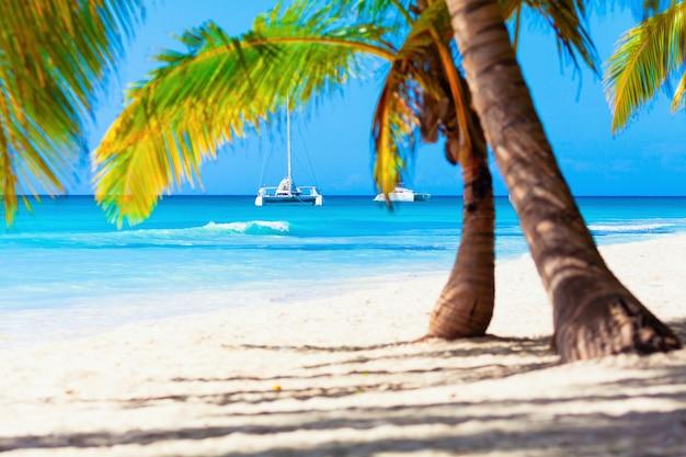 Vacanze estive vacanze sfondo carta da parati soleggiata tropicale esotica paradiso caraibico beach