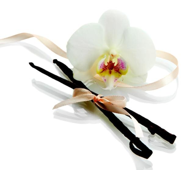 Baccelli di vaniglia con fiore isolato su bianco