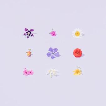 Variante fiori primaverili o estivi colorati sfondo viola pastello modello di natura creativa minima