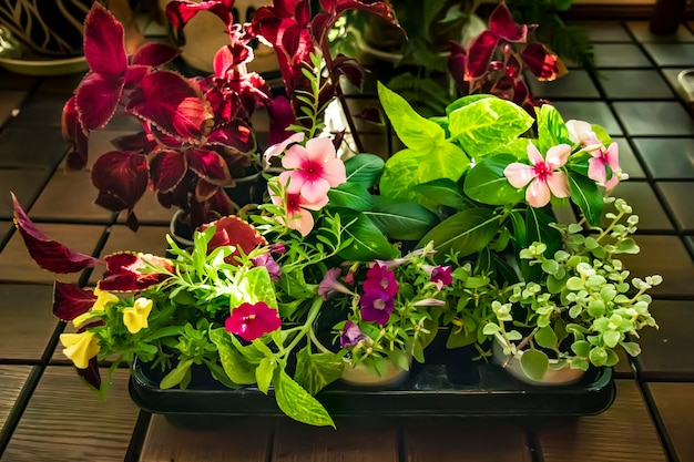 Varietà di fiori che sbocciano in un contenitore in vendita presso un negozio di fiori giardinaggio