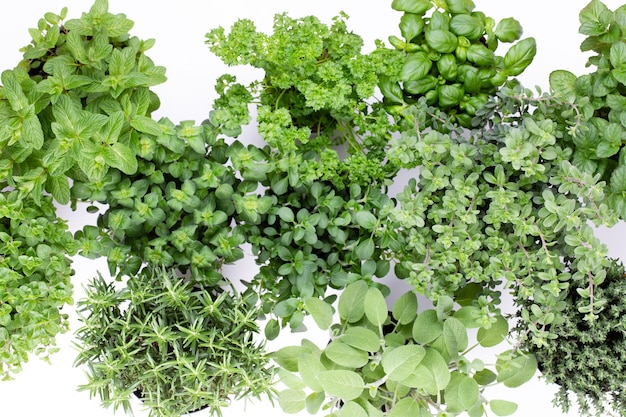 Varietà di erbe fresche isolate. maggiorana, prezzemolo, basilico, rosmarino, timo, salvia.