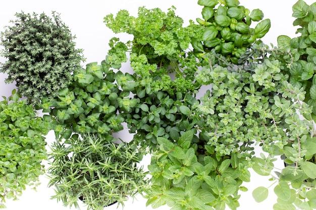 Varietà di erbe fresche isolate sulla superficie bianca. maggiorana, prezzemolo, basilico, rosmarino, timo, salvia.