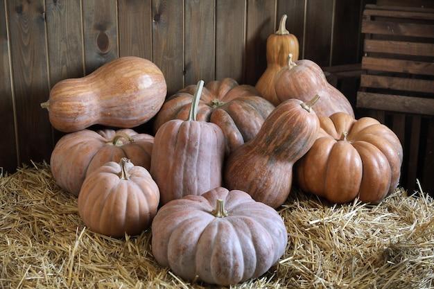 Varietà di zucche nella stalla.