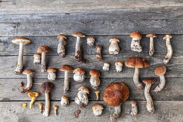 Varietà di funghi commestibili crudi penny bun boletus leccinum sul tavolo rustico
