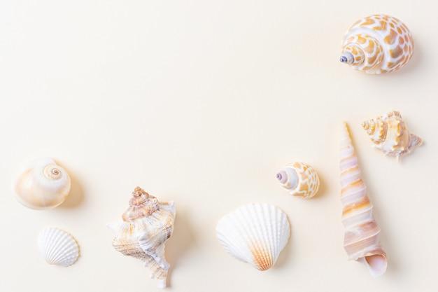 Una varietà di conchiglie su beige.