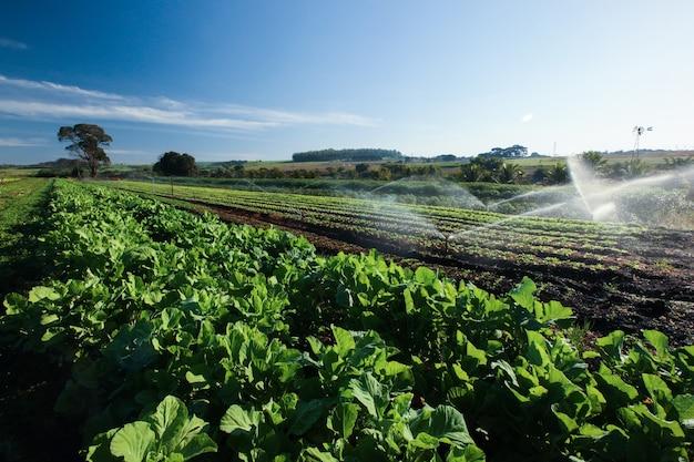 Varietà vegetali in crescita all'orto