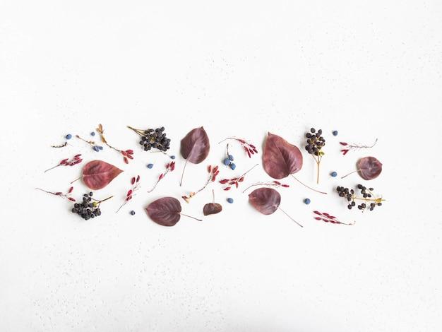 Varie bacche e foglie di alberi selvatici confine isolato su sfondo bianco texture e spazio aperto per il testo. sfondo di botanica. vista dall'alto. lay piatto