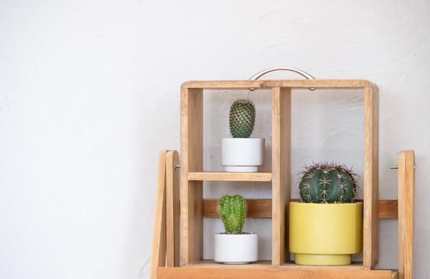 I vari cantus sullo scaffale di legno vicino al muro bianco per decorare nel piccolo caffè, vista frontale per lo spazio della copia.