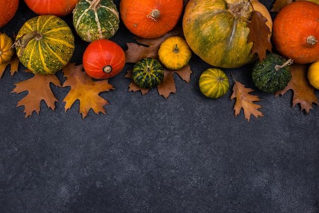 Varie zucche decorative concetto di autunno