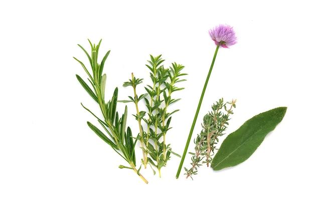 Varie erbe aromatiche fresche con erba cipollina in fiore su sfondo bianco