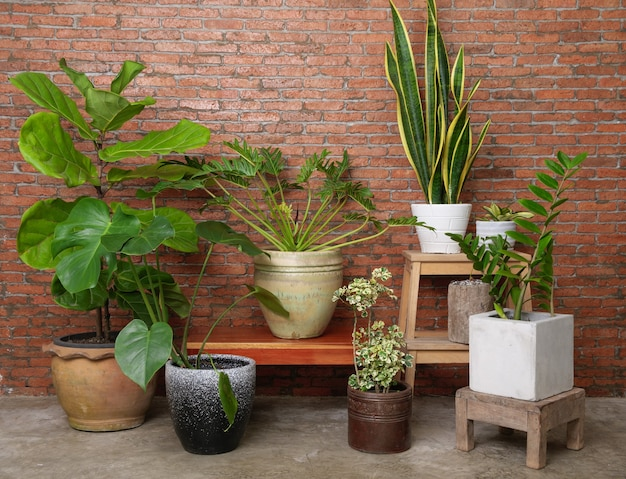 Varie piante da appartamento bellissime foglie verdi purificano l'aria naturale nel muro di mattoni della stanza moderna con monstera, philodendron xanadu, zamioculcas zamifolia, pianta del serpente, famoso albero interno fiddle fig