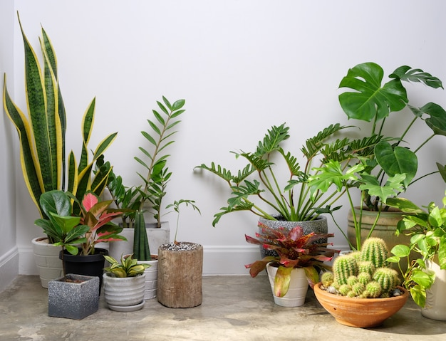 Varie piante da appartamento in un moderno ed elegante contenitore sul pavimento di cemento nella stanza bianca, l'aria naturale si purifica con monstera philodendron palm, zamioculcas zamifolia ficus lyrata con spazio di copia