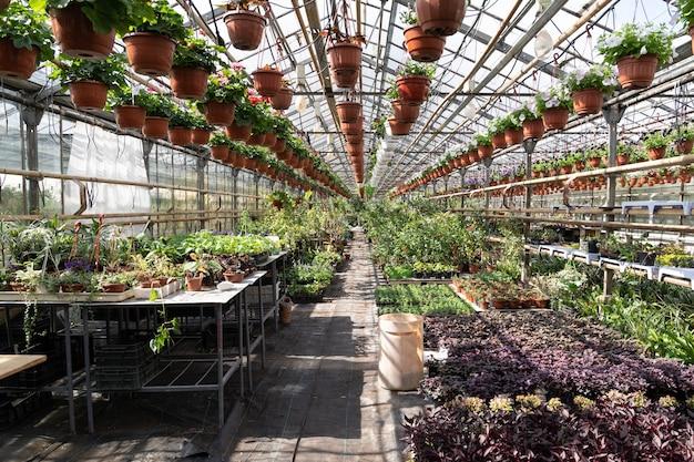Varie piantine crescono in vivaio biologico in serra di fiori e piante d'appartamento in serra