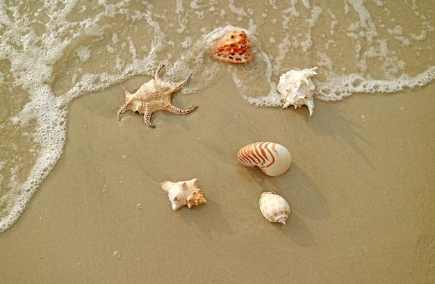 Vari tipi di splendide conchiglie naturali sulle onde che si infrangono sulla spiaggia di sabbia