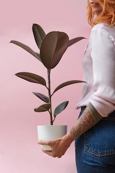 Vaso con ficus. una donna con un tatuaggio sulle mani tiene in mano un fiore su uno sfondo rosa. concetto di negozio di fiori