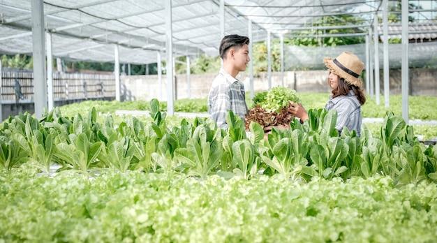 Insalata di verdure, agricoltore che raccoglie lattuga biologica dalla fattoria idroponica per i clienti