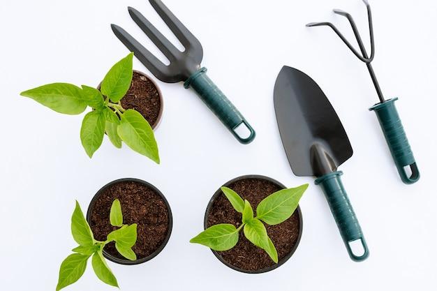 Piantine di ortaggi e attrezzi da giardino su sfondo bianco