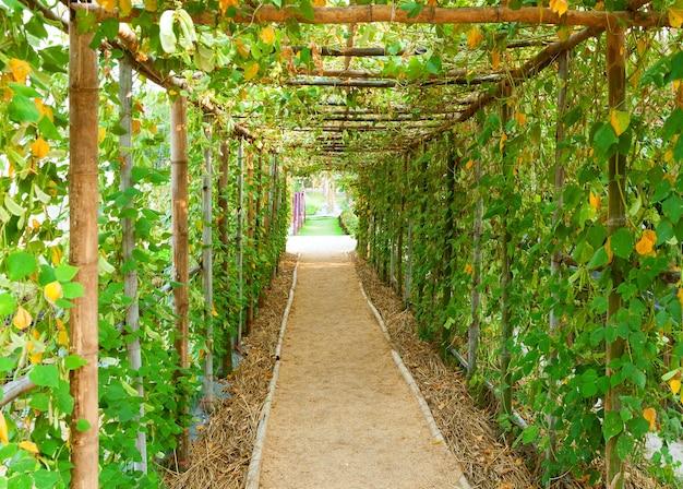 Tunnel vegetale con passaggio pedonale, passaggio tunnel albero verde