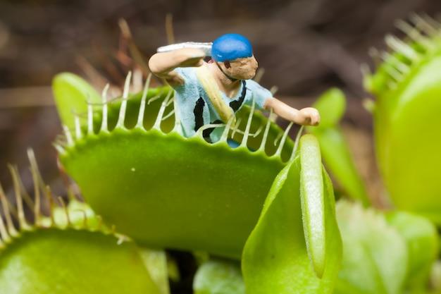 Foglia di acchiappamosche venere mangiando uomo in miniatura
