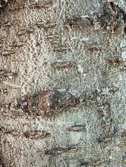 Primo piano verticale sulla corteccia della priorità bassa di struttura dell'albero