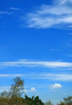 Immagine verticale del vivace cielo azzurro con nuvole bianche su fogliame verde
