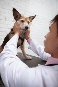 Colpo di angolo basso verticale di un cane lanuginoso sveglio esaminato dal veterinario maschio