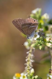 Ripresa verticale di una farfalla in un ambiente naturale