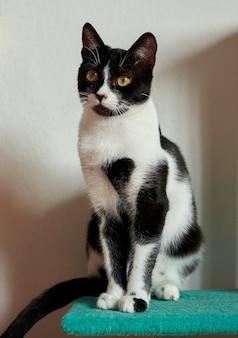 Un colpo verticale di un simpatico gatto bianco e nero con occhi luminosi