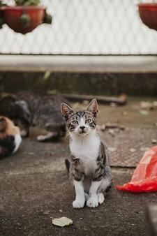 Colpo verticale di simpatici gatti all'aperto