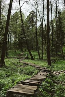 Ripresa verticale di una foresta verde con una strada stretta e una panca di legno