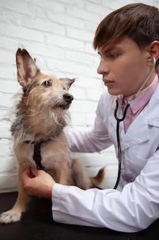 Colpo verticale di un bel maschio veterinario controllando il cuore del simpatico cane da salvataggio, utilizzando uno stetoscopio