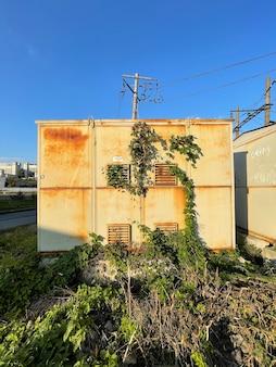 Colpo verticale di contenitori di metallo arrugginito con edera selvatica che cresce sotto il cielo blu