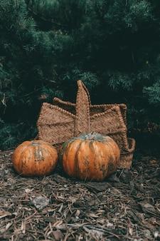 Un colpo verticale di due zucche vicino a un canestro su un suolo della foresta di autunno