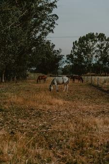 Colpo verticale di cavalli bianchi e marroni che pascolano al pascolo