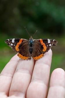 Ripresa verticale di una meravigliosa farfalla seduta sulla mano